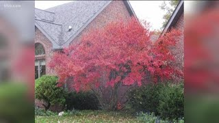You Can Grow It: Planting Trees That Have Lots Of Fall Color
