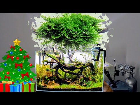 Mini Christmas Moss | Care Guide | Aquascaping