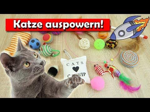 Katze müde machen mit Katzenspielzeug - Katzenspielzeug im Test!