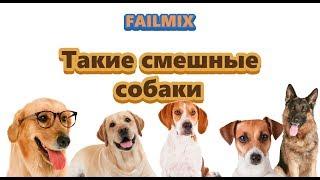 Приколы с собаками 2018 года - подборка видеороликов бессовестных собак.