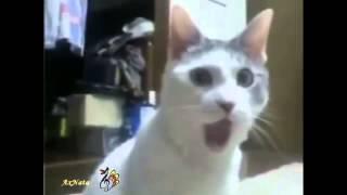 Кошки, кошки Забавные кошки! Поют, говорят, ТВОРЯТ, поздравляют!