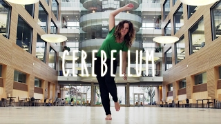 The Cerebellum - UBC Neuroanatomy - Season 1 - Ep 8
