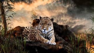 COOL CATS PHOTO - Jaguar (Ягуар)
