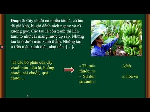VNEN Tuân 24 Tiếng Việt 4 Bài 24B Vẻ đẹp của lao động T2