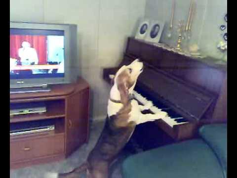 Τι μουσική παίζει ο σκύλος στο πιάνο;!