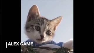 Смешные коты 2017 ТОПовая Подборка  Лучшие Приколы с котами  Funny Cats