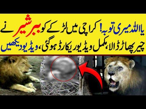 کراچی میں ببر شیر کا بچے پر حملہ :ویڈیو دیکھیں