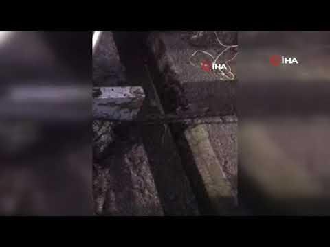 İzmir'de çukura düşen ineğe iki saatlik operasyon