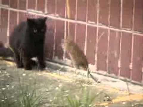 Mèo mà sợ chuột