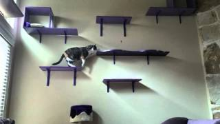 My cat finally using catification shelves