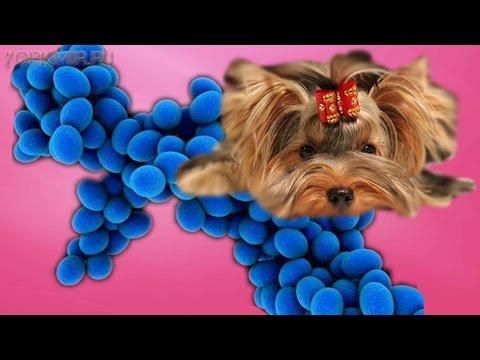 Пиодермия у собак | Симптомы | Лечение | Профилактика.