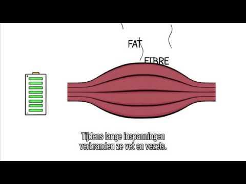 Lexercice sur le muscle intérieur du ventre