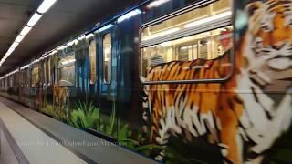 Тигр догоняет Плехановца