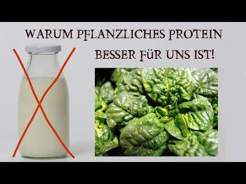 Pflanzliches Protein oder Tierisches Eiweiß?