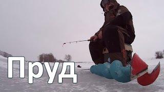 Ловля окуней на прудах зимой