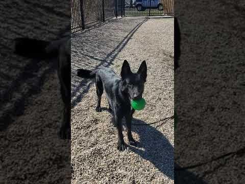 Brady, an adoptable German Shepherd Dog in Nahant, MA_image-1