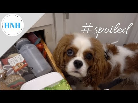A Spoiled Dog Vlog & Organizing Dog Treats AGAIN