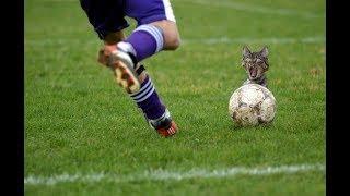 Смешной футбол. Лучшие футбольные приколы