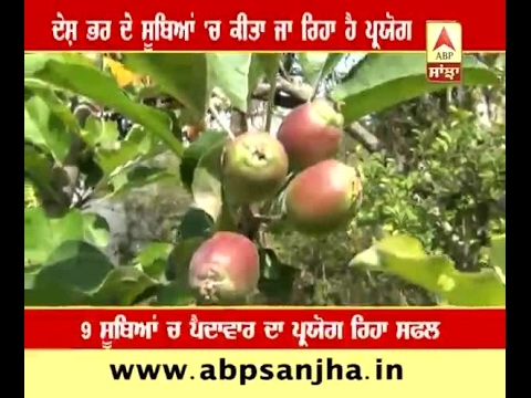 Now apples can grown in hot area's also, Bilaspur famers make it possible