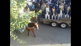 preview picture of video 'Cabalgata Feria Regional Villanueva 2014 parte 1'