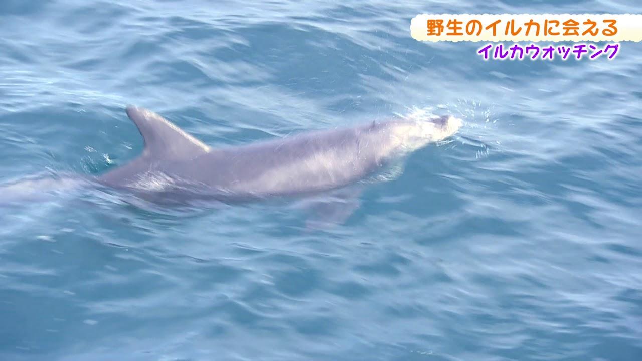 02月17日放送 「海旅」