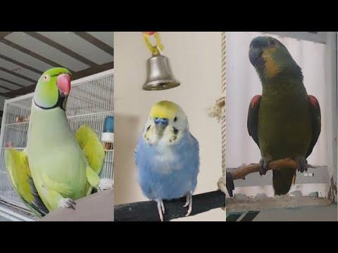 Videos Of Animals We Love Birds