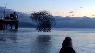 Birds Fly In Shape-Shifting Pattern