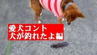 愛犬コント:犬が釣れたよWasabletocatchadog:dogEntertainment