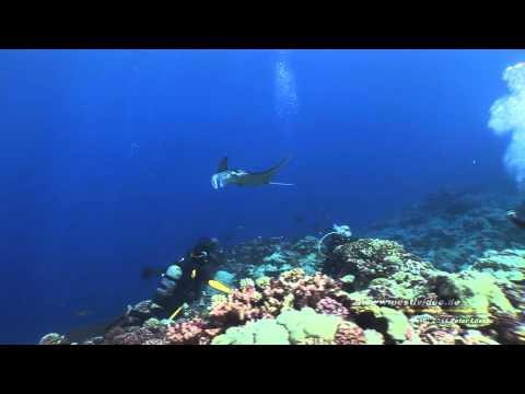 """""""Raroia Atoll - Manta Reef"""" Französisch Polynesien- Tuamotus AquaTiki Reisebericht Tauchen, Raroia,Französisch-Polynesien"""
