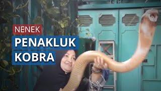 Pelihara 9 Kobra di Rumahnya dan Bantu Evakuasi Ular, Nenek Ini Dijuluki Warga 'Ratu Ular'
