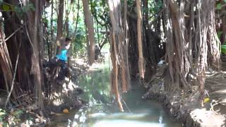 preview picture of video 'BOTANICAL GARDENS, PAMPLEMOUSSES, MAURITIUS - SWINING ON RUBBER VINE'