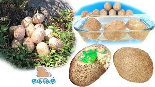Яйца с сюрпризом! Динозавры для детей! 12 ДИНОЗАВРОВ В НАШЕМ ПАРКЕ! Видео для детей