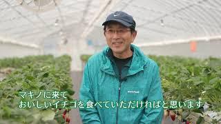 2019/04/11放送・知ったかぶりカイツブリにゅーす
