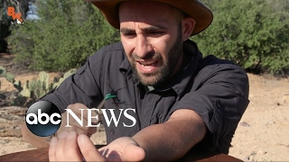 Brave Wilderness: Coyote Peterson Gets Bit by Terrifying Animals