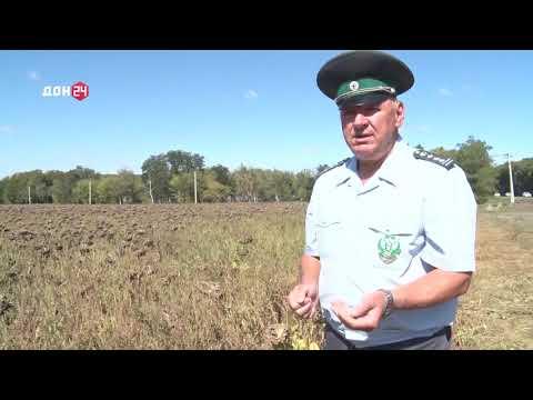 Управлением Россельхознадзора при проведении мониторинга фитосанитарного состояния полей Ростовской области выявлены очаги произрастания амброзии полыннолистной