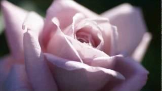 Chris Rea - Every Beat Of My Heart (1982) - YouTube.flv