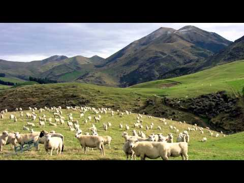SOFIA's New Zealand Adventure