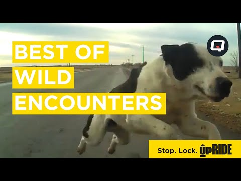 Best of Wild Encounters Compilation