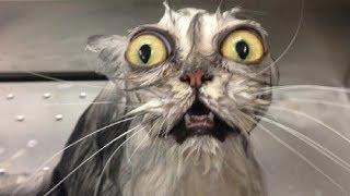 Смешные коты и котята!   🐈 Милахи коты 🐈   Смешные и милые моменты