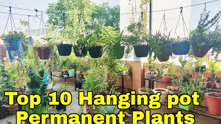 Top 10 Hanging Pot Permanent Plants, Best 10 Permanent Hanging Plants For Your Garden
