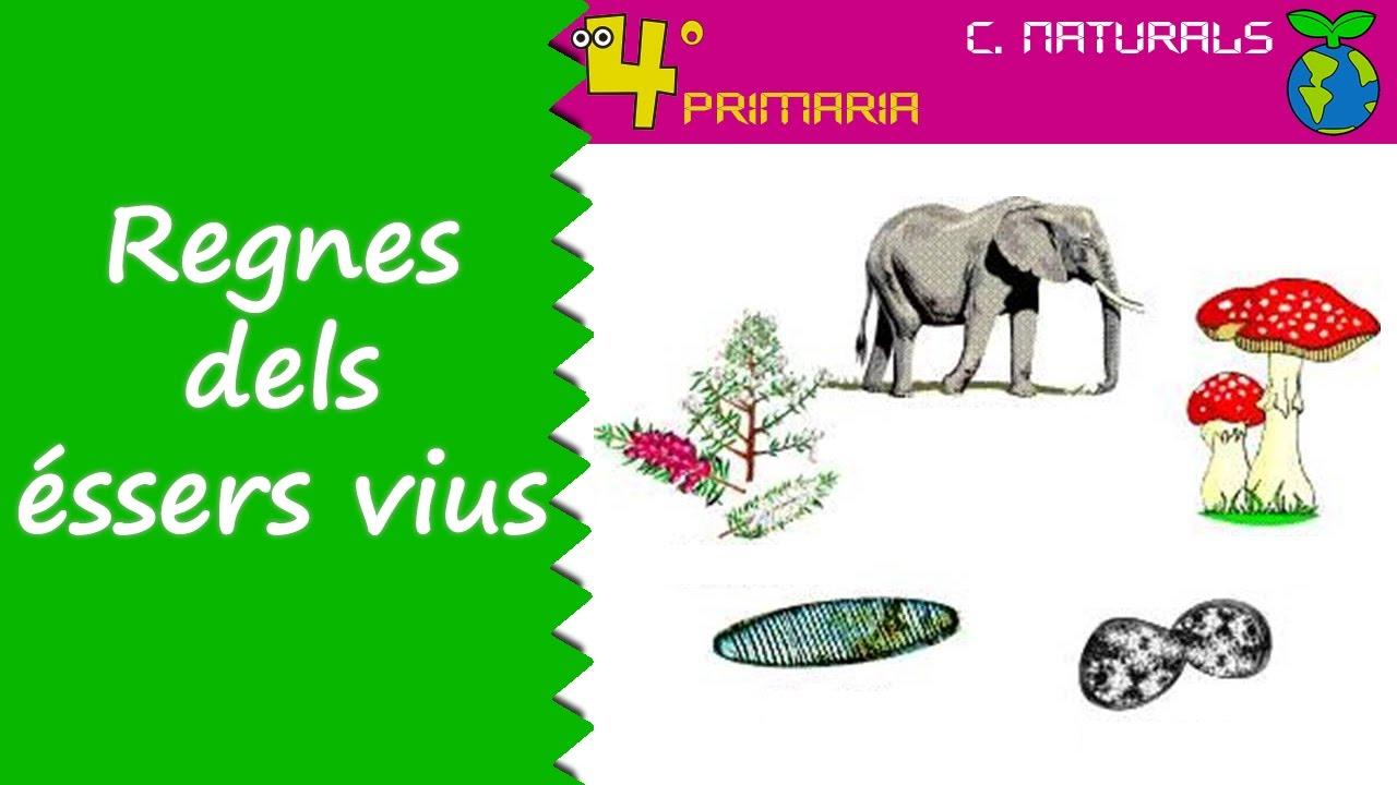 Ciències de la Naturalesa. 4t Primària. Tema 4. Classificació dels éssers vius