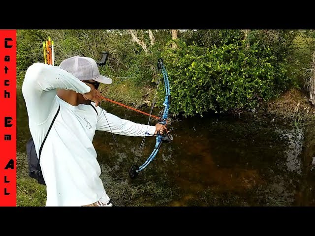 BOWFISHING SLOW MOTION Compound Bow vs Recurve Bow