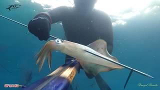 Spearfishing Croatia