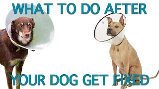 How To Care For Dogs After Spay Neuter