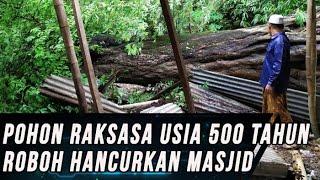 Pohon Raksasa Berusia 500 Tahun Roboh Hancurkan Masjid di Pamekasan