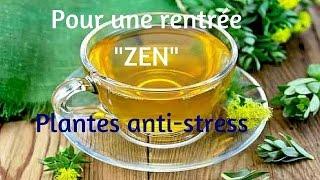 TRUCS ET PLANTES ANTI-STRESS POUR UNE RENTRÉE «ZEN»