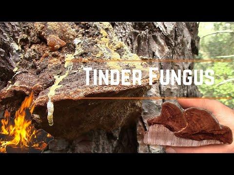 Specie dei parassiti che vivono in intestini