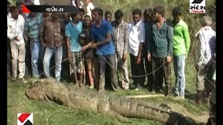 One Person Death In Crocodile Attack At Near Padra In Vadodara