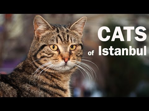 The Cats Of Istanbul – Furballs Of Personality In The Teeming Metropolis
