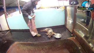 preview picture of video 'Dingle Wildlife and Seal Rescue / Sanctuary'
